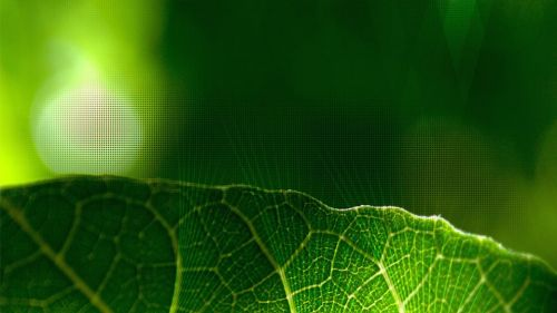 Wallpaper Leaf